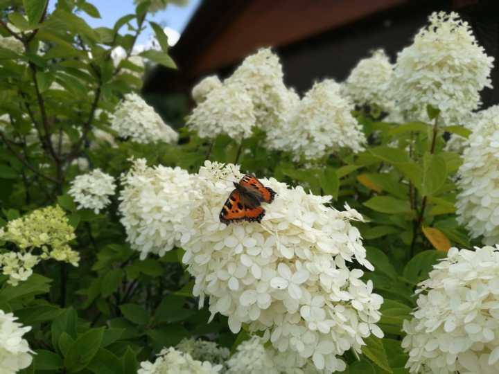 Photo Diary – Garden Stories#1