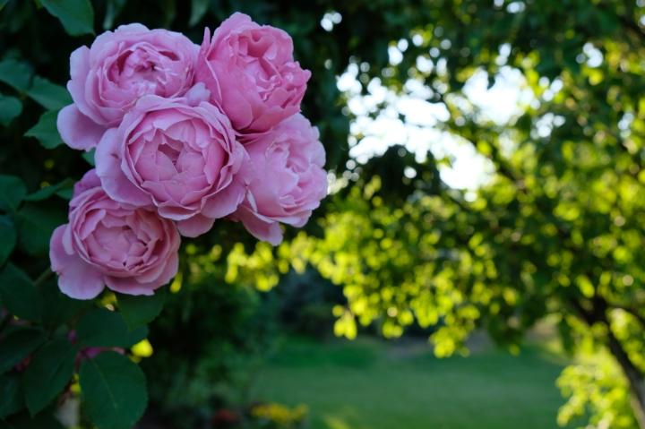 Photo Diary #4 Garden in bloom &butterflies